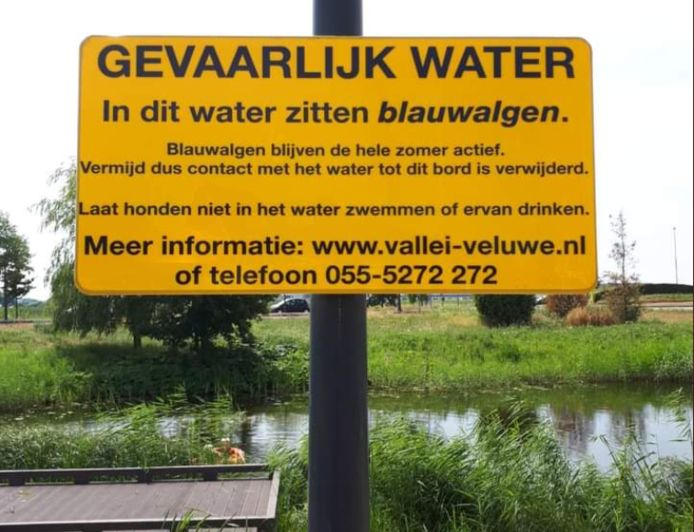 De gemeente Nijkerk waarschuwt voor blauwalg bij de sluis van de Arkervaart.