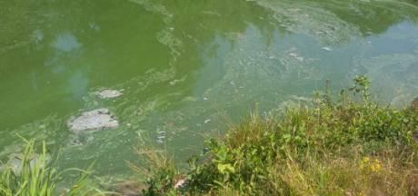 Waarschuwing voor blauwalg in water Flierbeek Lichtenvoorde