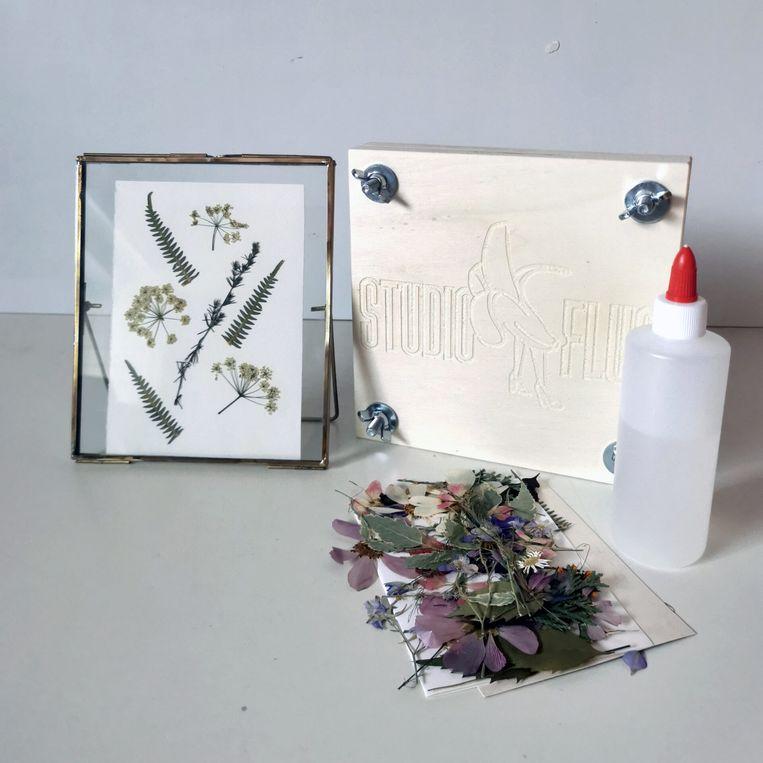 DIY Herbarium van Studio Fluo.