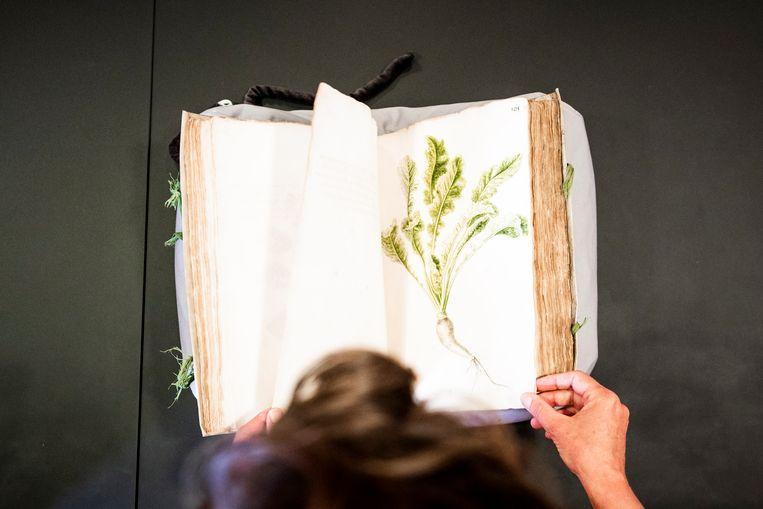Tinde van Andel bladert door een oud VOC-boek in de Universiteitsbibliotheek in Leiden.  Beeld Freek van den Bergh