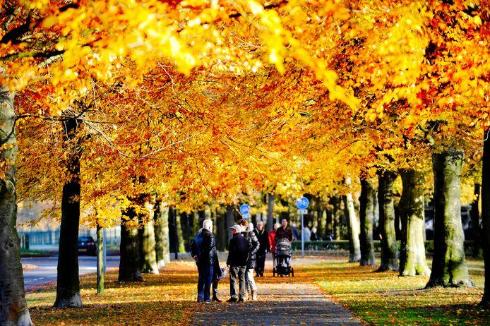 Schitterende herfstkleuren in Twente, maar oh zo droog