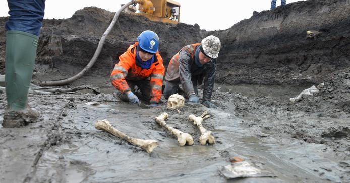 Het skelet wordt opgegraven