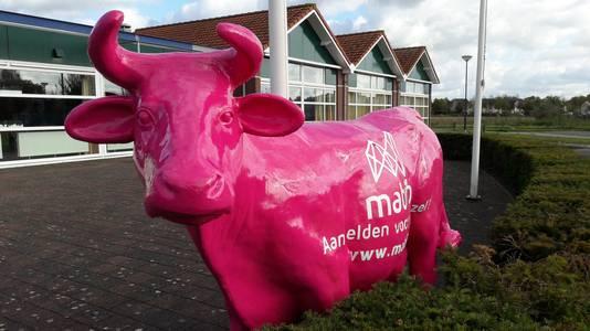 De roze koe van Mabib Breedband bij d'Alburcht in Wijk en Aalburg.