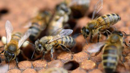 """""""Catastrofe voor mens en planeet"""": Belgische wetenschapper trekt aan alarmbel over nooit geziene insectensterfte"""