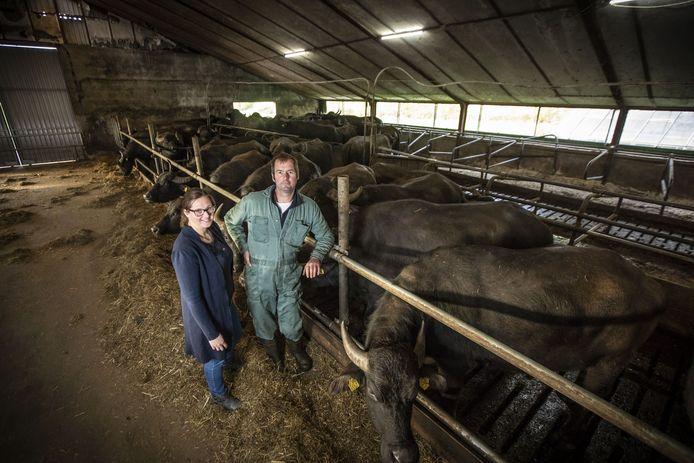 Andra en Alfons Blokhuis op de Buffalo Farm Twente, waar echte buffelmozarella gemaakt wordt.