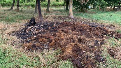 6 brandstichtingen in 9 dagen: wie is de 'plantenpyromaan' van De Panne?