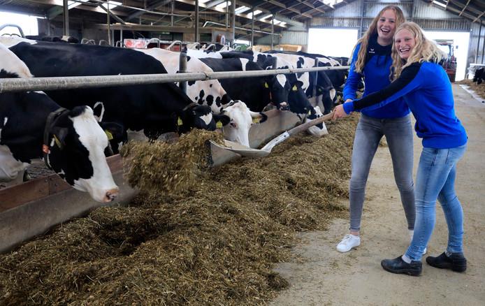 Lisan en zus Aniek (links) van den Broek in de koeienstal van hun boerderij.