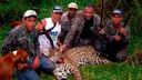 De jaguar is in Zuid-Amerika grotendeels beschermd, maar daar hadden de jagers geen boodschap aan.