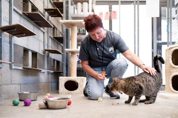 MECHELEN Dierenbescherming Mechelen wordt 75 jaar: honden en katten krijgen een traktatie!