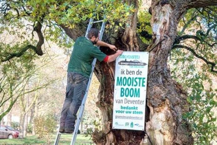 De huldiging van de herfstboom. Eigen foto