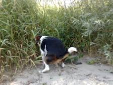 150 'illegale' honden in Veldhoven, eigenaren moeten nog belasting betalen