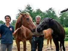 Paarden Stal Mansour weer beter